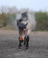 verschlag bei pferden