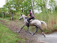 pulsuhr pferd