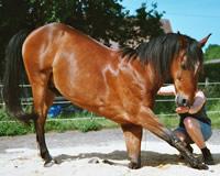 stoffwechselstörung pferd symptome