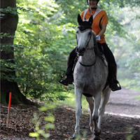 stoffwechselerkrankung beim pferd