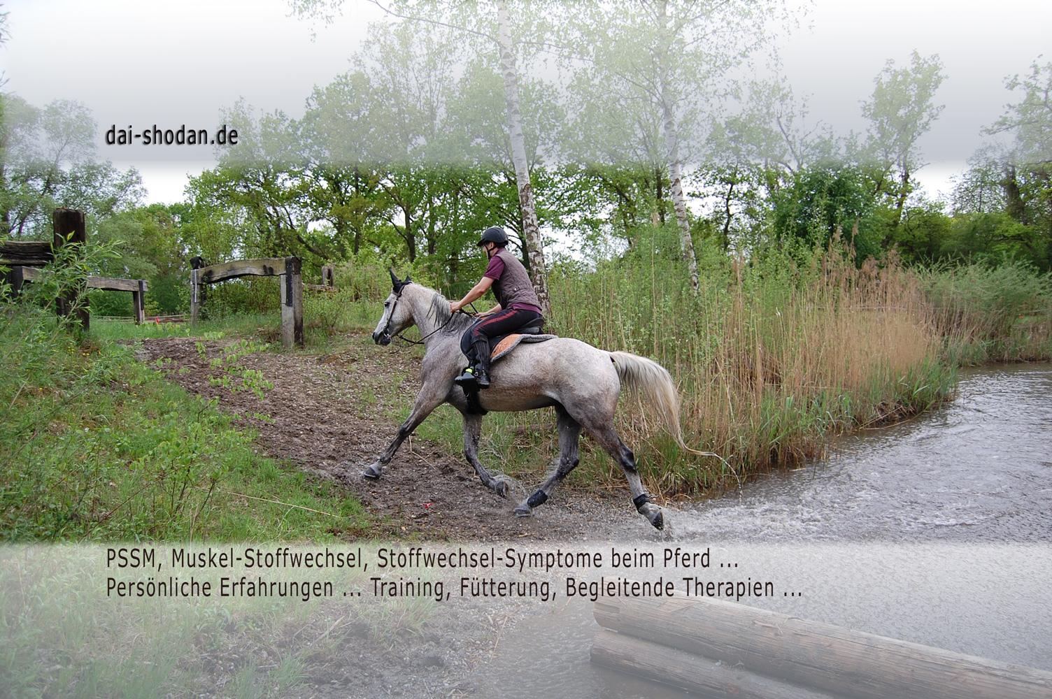 Exertional Rhabdomyolysis in Horses